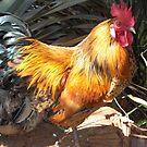 Farm talk - Artemis in glorious colour by Maree Clarkson