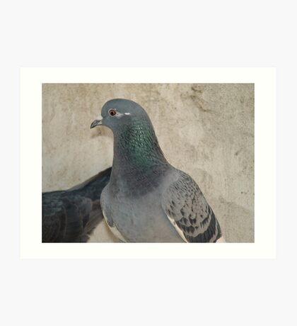 Mask - Love for Pigeons Art Print