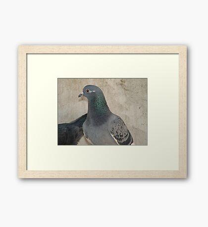 Mask - Love for Pigeons Framed Print