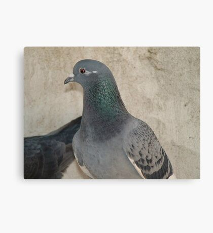Mask - Love for Pigeons Canvas Print