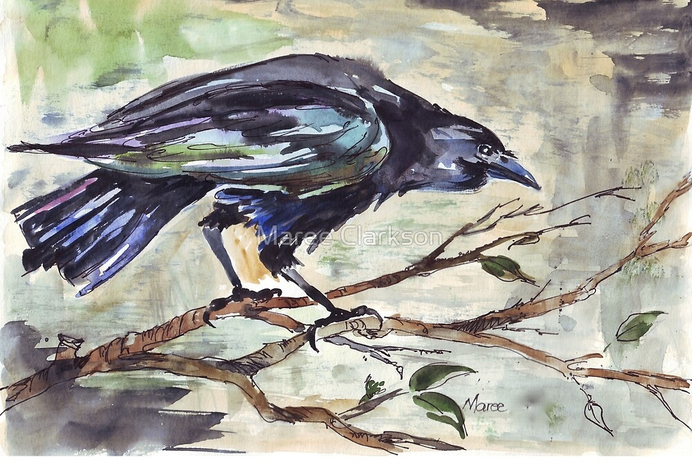 Corvus capensis - Coco by Maree Clarkson