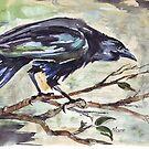 Corvus capensis - Coco by Maree Clarkson