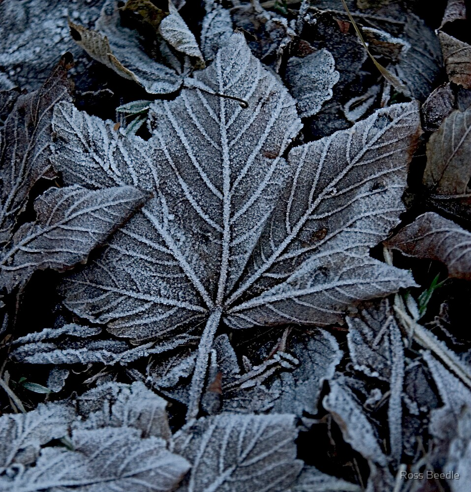 Frost on leaves by Ross Beedle