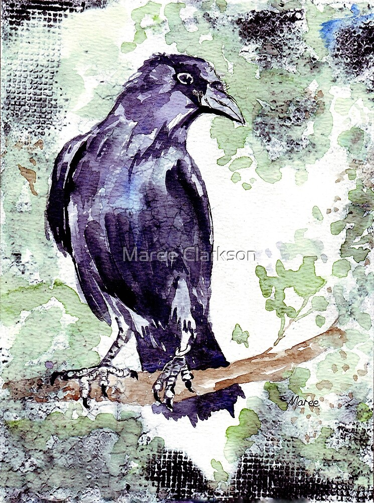 Crow wears a band of Silver - Coco by Maree Clarkson