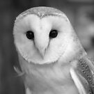 Curious Barn Owl (b&w) by hummingbirds