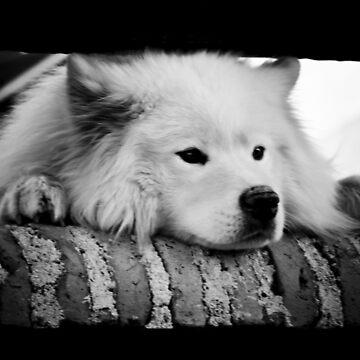 dog by Creando