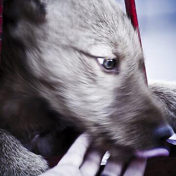 dog 2 by Creando