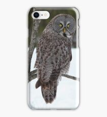 Magnificent Great Grey Owl iPhone Case/Skin