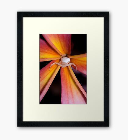 Crab Spider on Frangipani 2 Framed Print