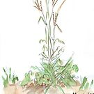 Finger grass - Botanical illustration by Maree Clarkson