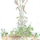 Fingergras - botanische Illustration von Maree Clarkson