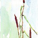 Manna vom Himmel (Babala) - botanische Illustration von Maree Clarkson