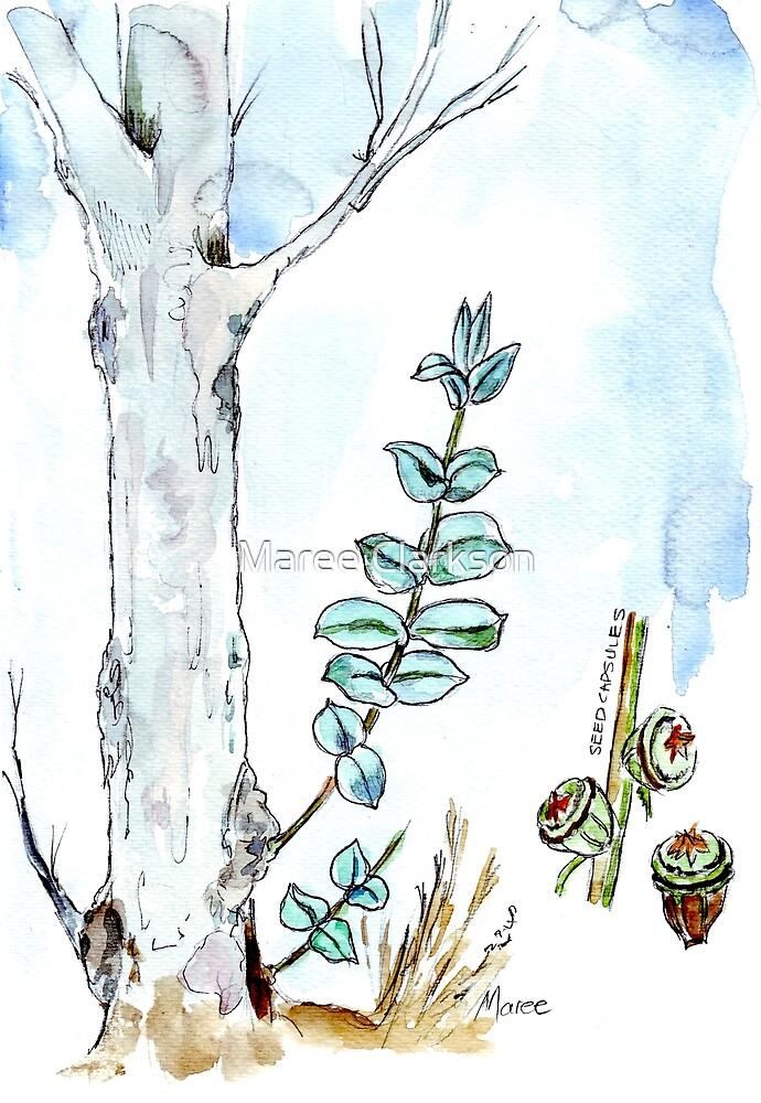 Eucalyptus and gum seeds - a fresh start - Botanical illustration by Maree Clarkson