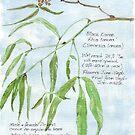 Black Karee leaves - Rhus lancea - Botanical illustration by Maree Clarkson