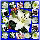White Delight - Summer Flowers Collage von BlueMoonRose