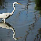 The Egret  by D-GaP