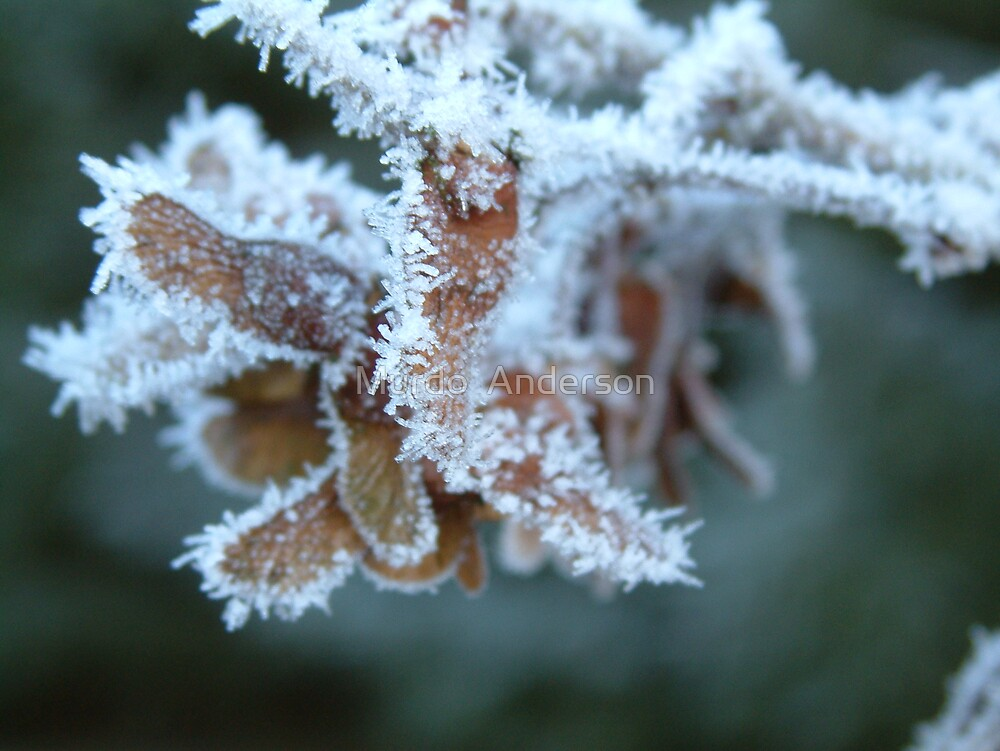 Frost by Murdo  Anderson