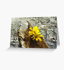 flower boat Greeting Card