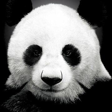 Panda by pinestopalms
