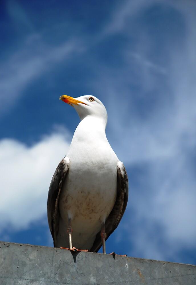 Whitby Seagull by Danielle Boskamp