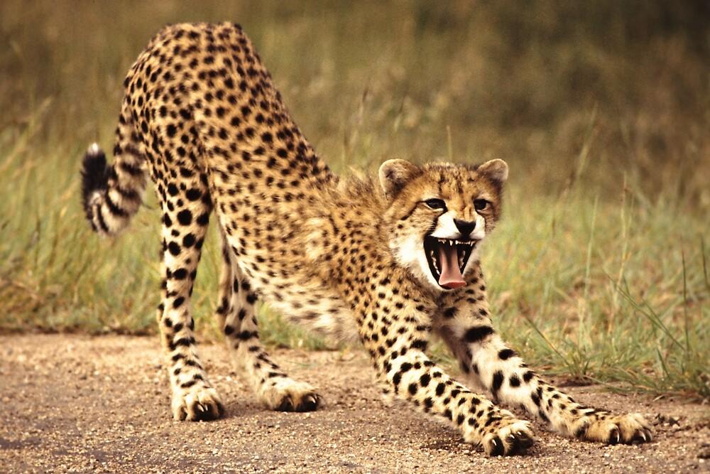 The Cat's Meow by David  MacCallum-Price