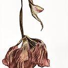 Tulip Drop V2 by Ann Garrett