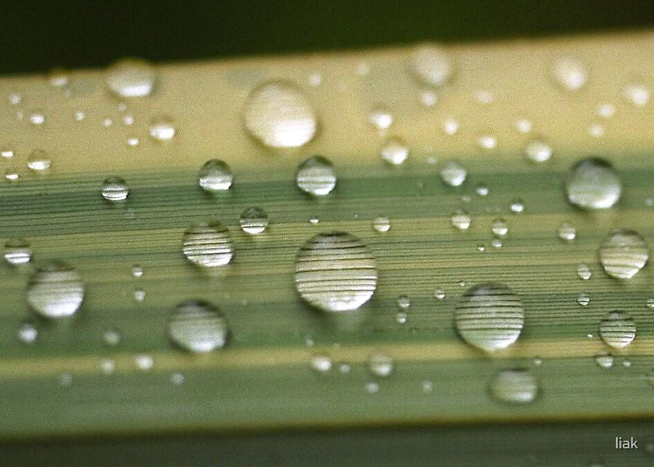 water drops by liak