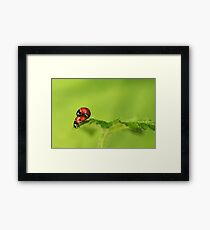 There must be something in the air... Framed Print