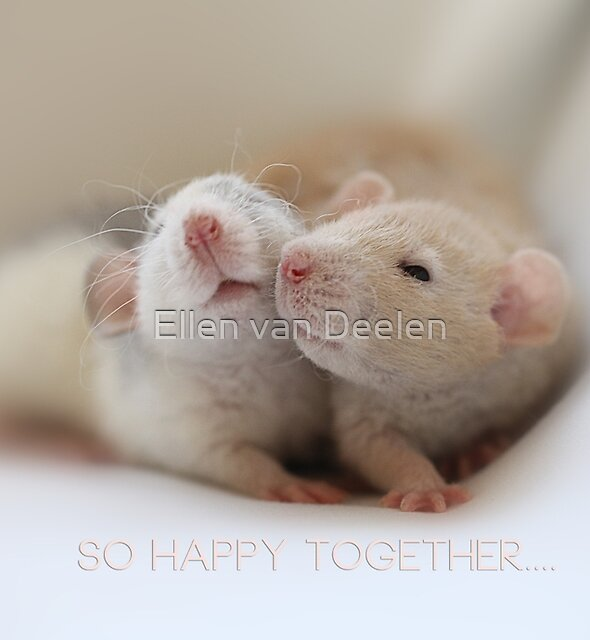 Friendship by Ellen van Deelen