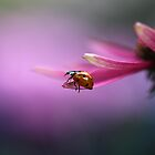 Ladybird on pink flower by Ellen van Deelen