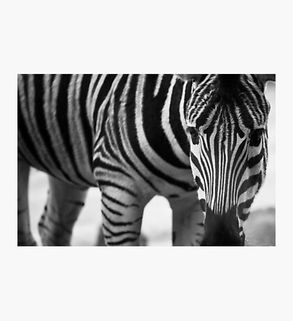 Stripes and more stripes Photographic Print