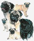 Pugs by BarbBarcikKeith