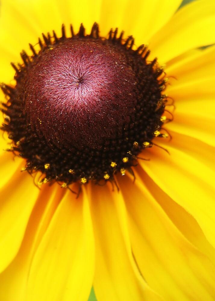 Not Quite A Sunflower by Kobalt