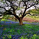 THE BLUEBELL CANOPY by NICK COBURN PHILLIPS