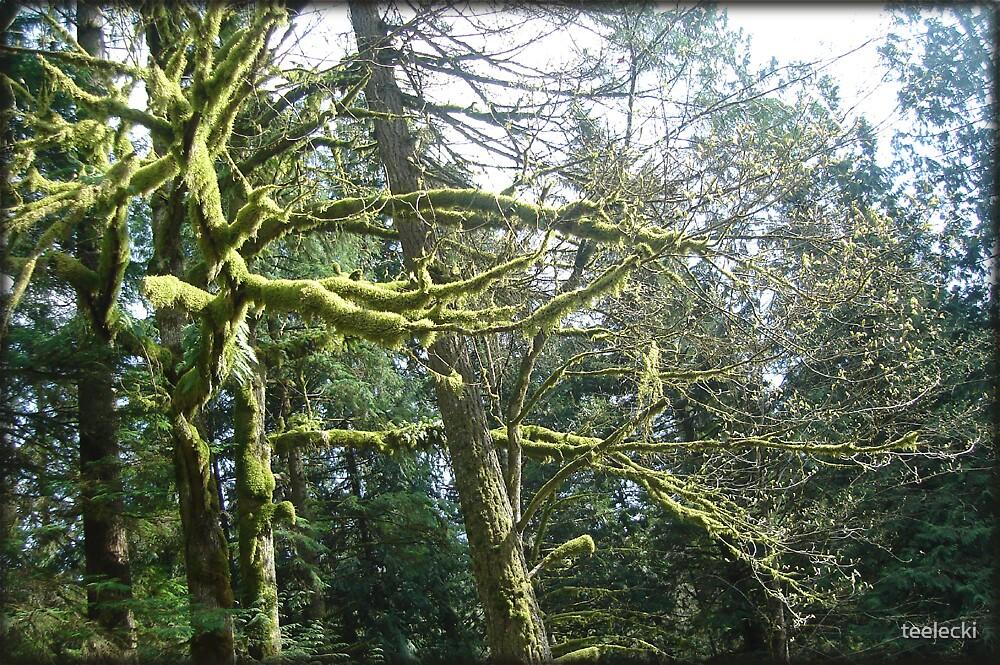 tree fuzz by teelecki