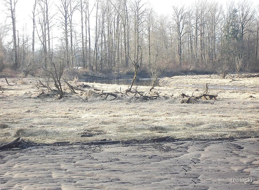 Old marsh by teelecki