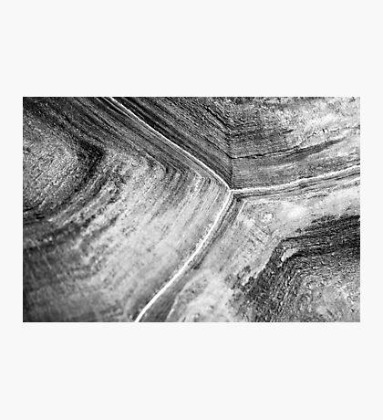 Shellscape of a giant tortoise. Photographic Print