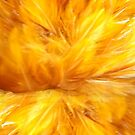 Feather Duster 2 by DAdeSimone