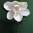 Magnolia flower by Penny Odom