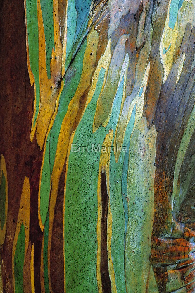 Snow Gum Bark by Ern Mainka