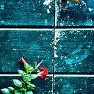 Red flower against old door by Silvia Ganora