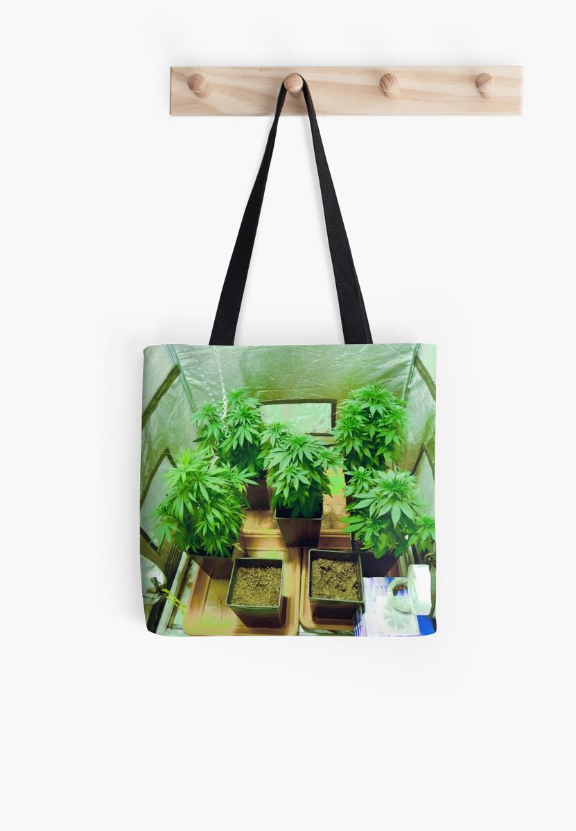 Home Grown Cannabis plants.  by PhotoStock-Isra