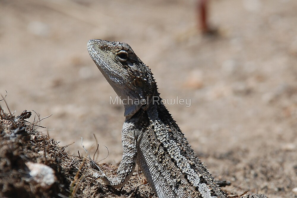 Lizard by Michael Rowley