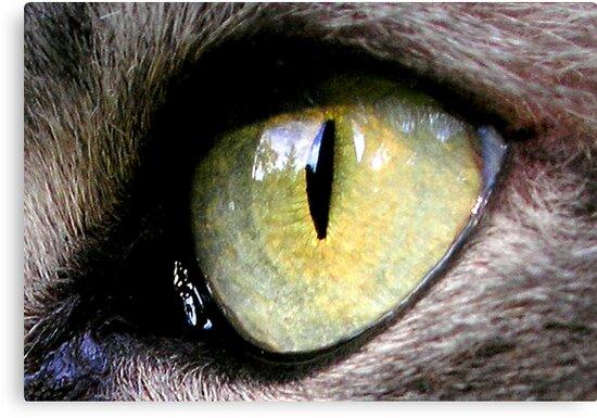 Jimmy's Eye by Lenny La Rue, IPA