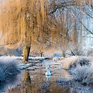 Winter in Bushy Park by Stephen Liptrot