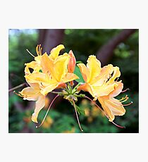 The Glory of Spring Photographic Print