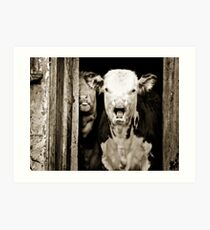 mad cow? Art Print