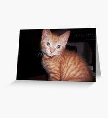 Ginger kitten cuteness Greeting Card