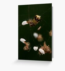 Lacewing Larvae Greeting Card
