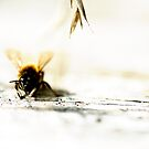 lone bee by caradione